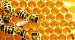 شفای عسل در کندو