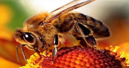 از زنبور عسل بیاموزیم